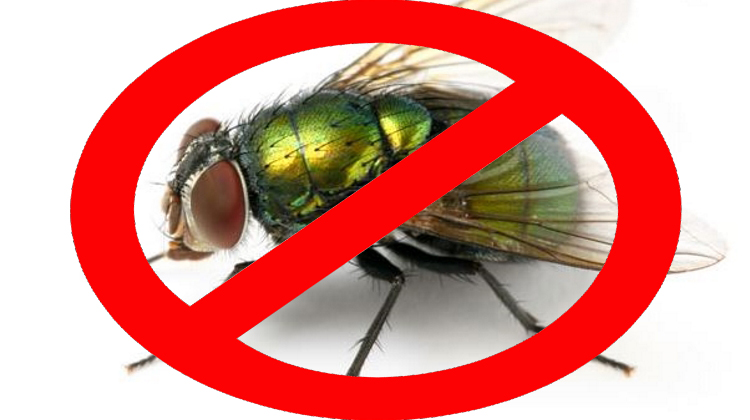 the top five ways to manage flies with horses