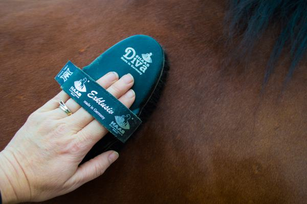 Haas Diva Exclusive Brush Review-The Ultimate Horse Brush!
