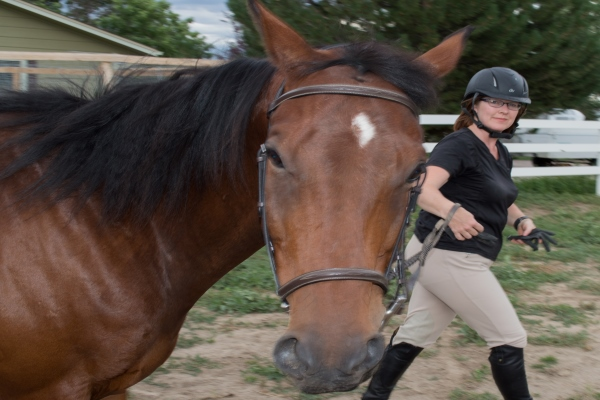 lessons learned from my first horse show