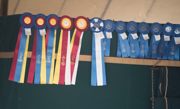 horse show ribbons hanging on a stall