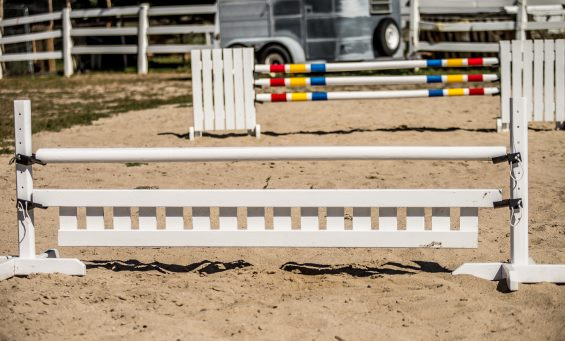 horse jumps in an arena