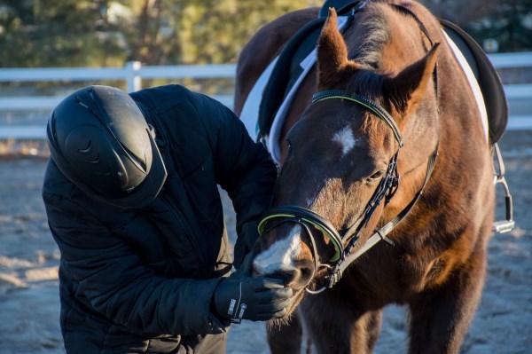 equestrian 30 day blog