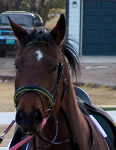 horse blog challenge