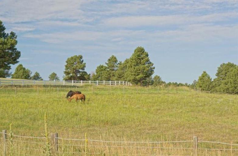 dream horse property