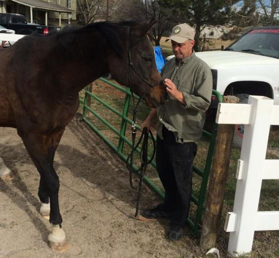 the non-equestrian horse owner