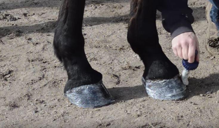 pony glam