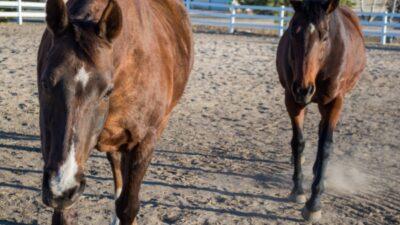 What I feed My Horses