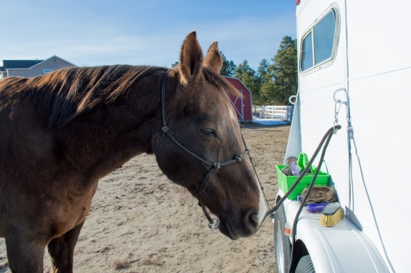 Top 10 Tips To Shedding Out Your Horse This Spring