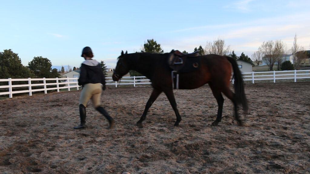 10 Questions Equestrian Blog Hop