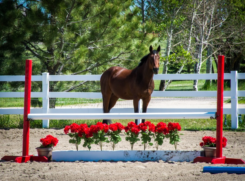Easy horse photography tips