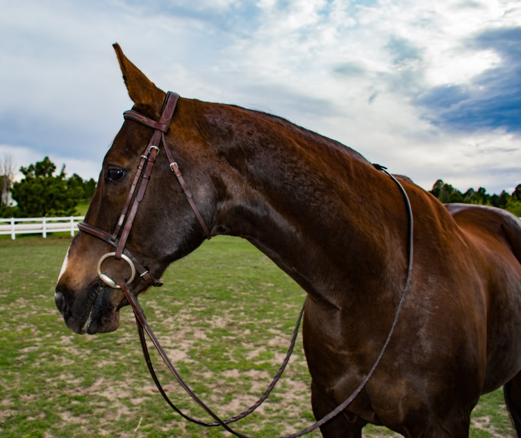 easy tips for taking horse photos