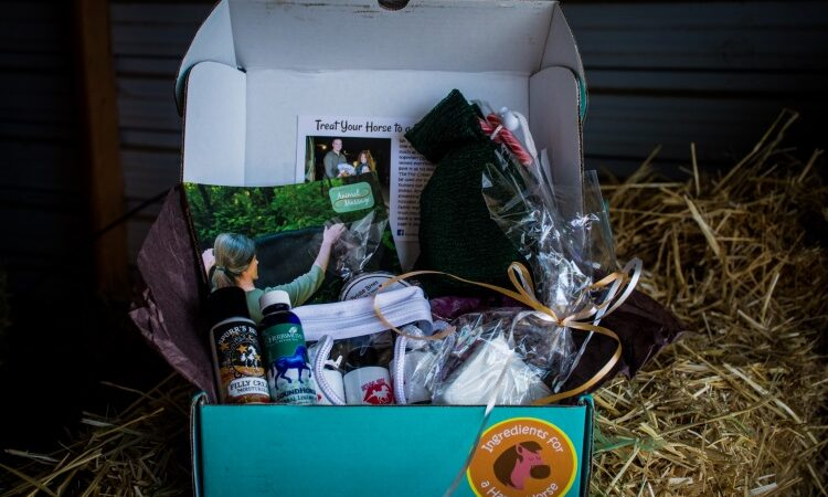 saddle box horse box review