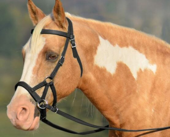 thinking about going bitless for a sensitive horse
