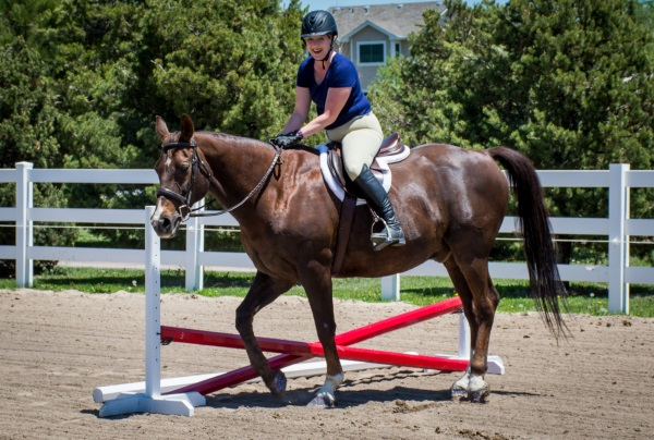 Summer Horse Shows At The Colorado Horse Park