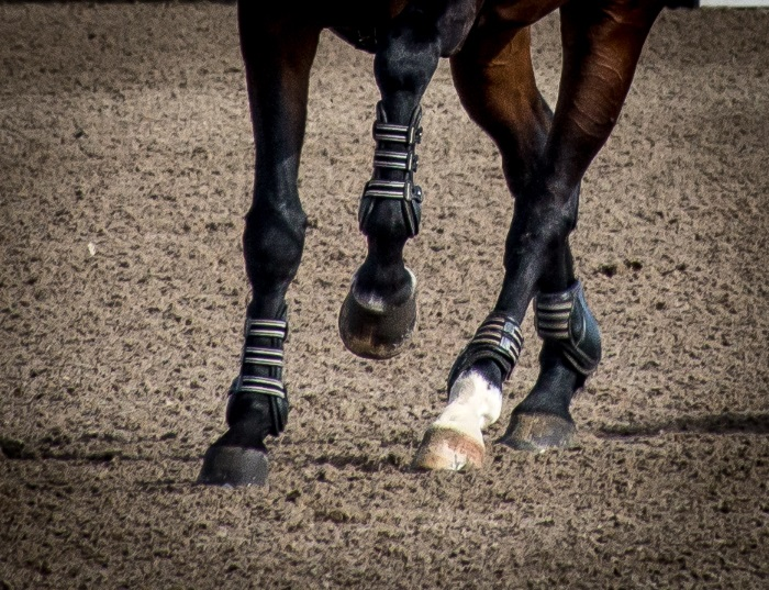 a close up view of a jumper horse's legs