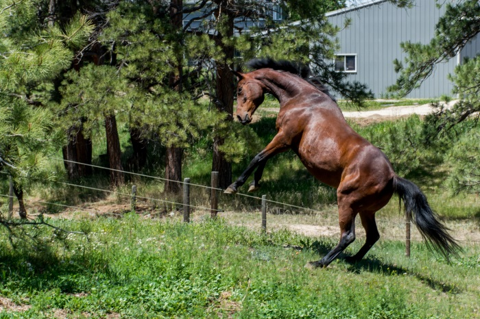 Easy Photography Tips For Horse Lovers