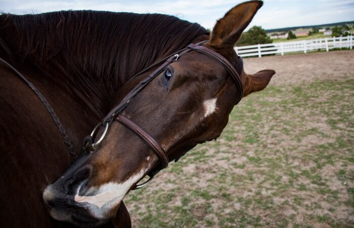 6 Photography Exercises To Get Better Photos Of Your Horse