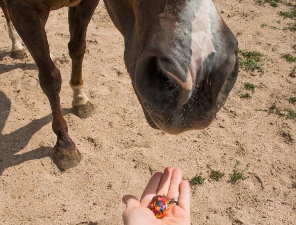 saddle box horse treats