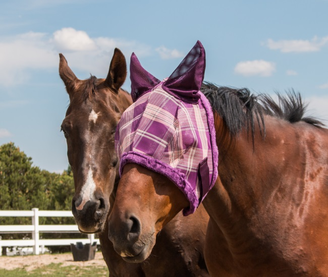 horses in fly masks