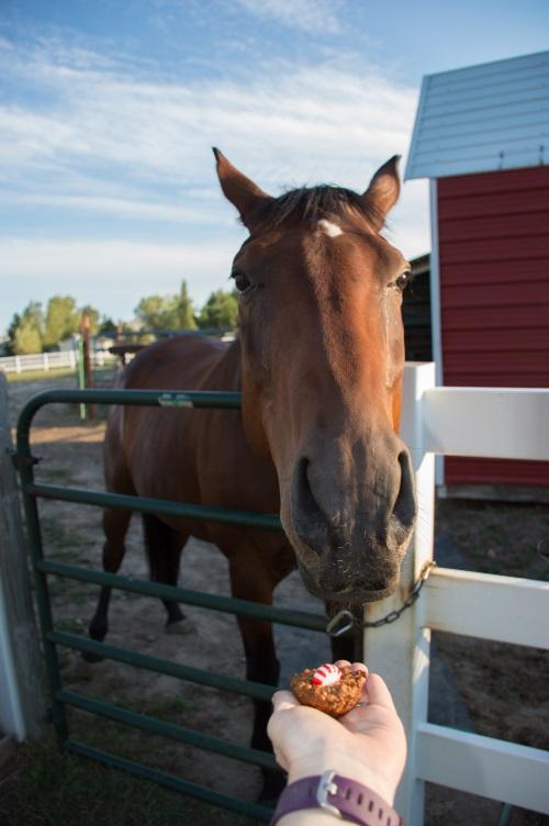 Homemade Horse Treats Recipe Horse Cake Pops Budget