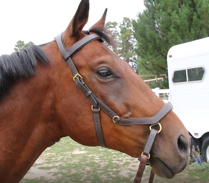 Going bitless day 11 of being a better rider budget for Where can i go horseback riding near me