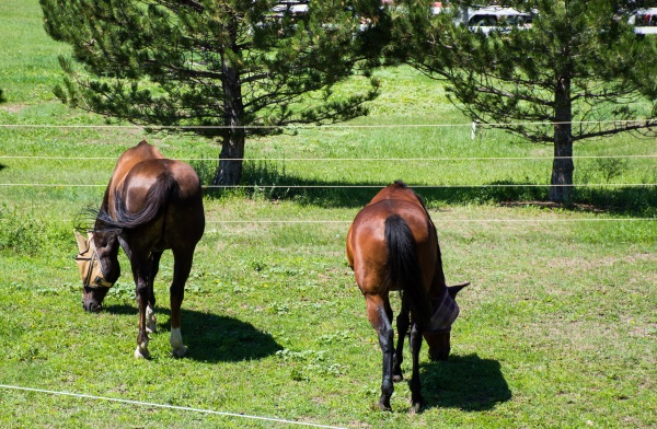 horses after hysterectomy