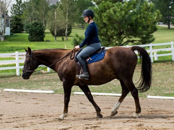 Improving Your Horses Responsiveness