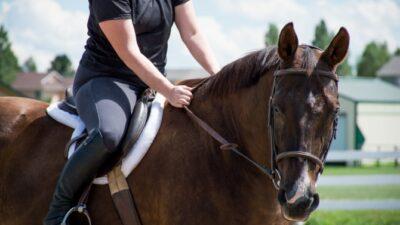 budget equestrian weekly video recap
