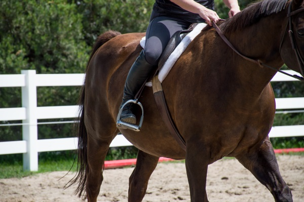 Get Your Horse Moving Forward