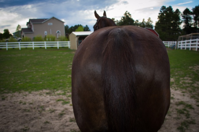 engaging your horses hind end