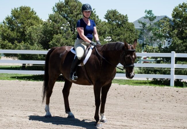 riding lessons as an adult rider