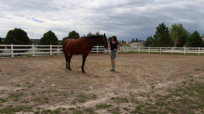 ground work with horses 2.0