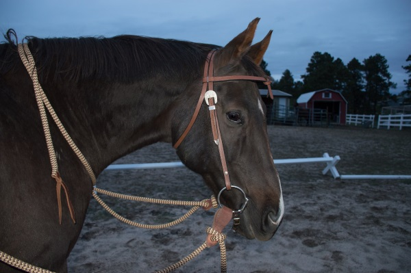 slobber straps and mecate reins