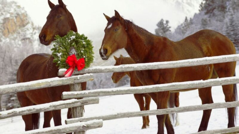 affordable Christmas presents for equestrians
