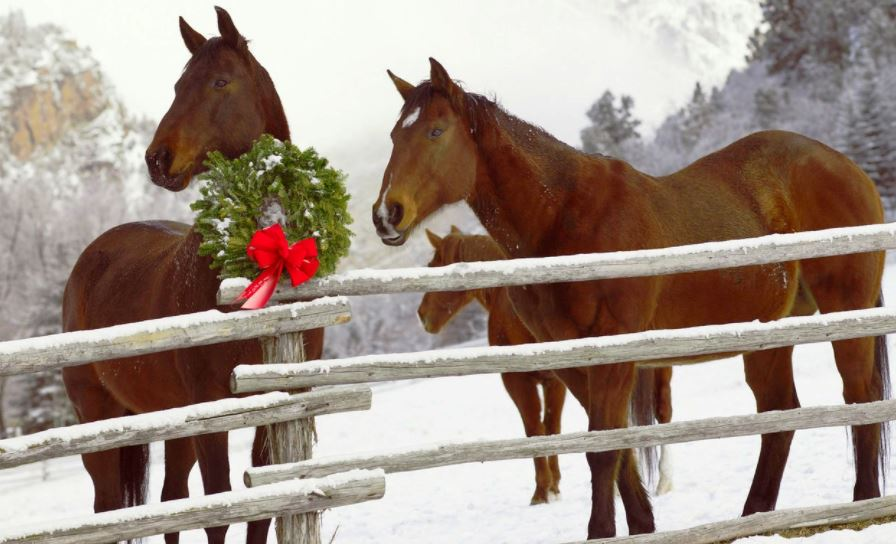 Affordable Gift Ideas For Equestrians