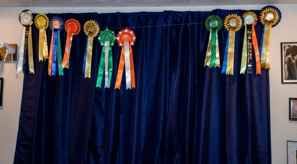 hanging up horse show ribbons