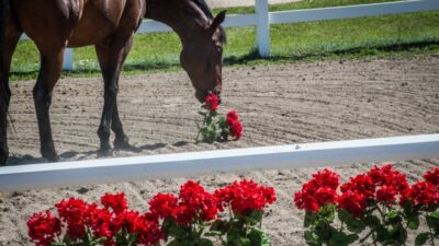 flower filler for horse jumps