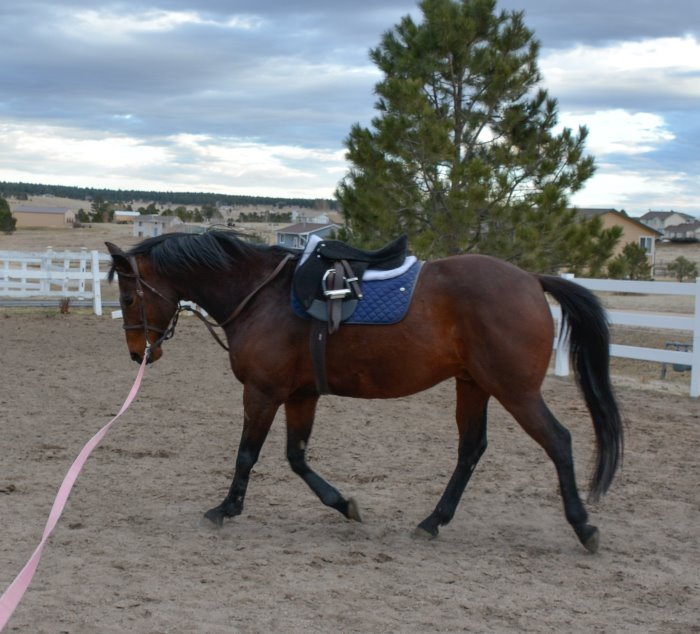My Weekly Riding Lesson – All By Myself