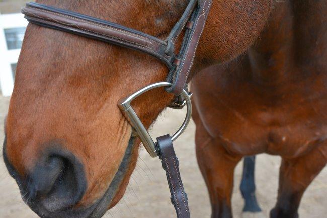 Centaur Blue Steel D Ring Bit