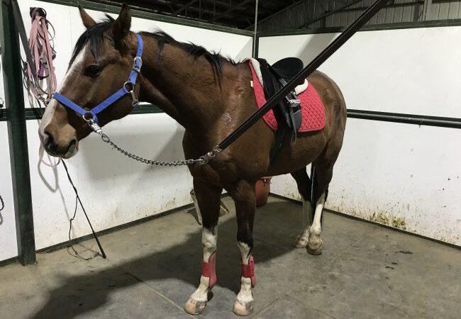 horse standing in cross ties