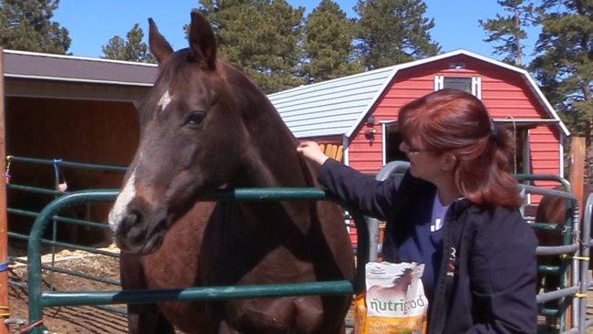 Low Sugar Horse Treats