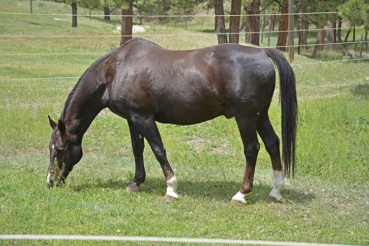 a horse grazing in a pasture