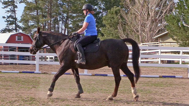 benefits of walking your horse