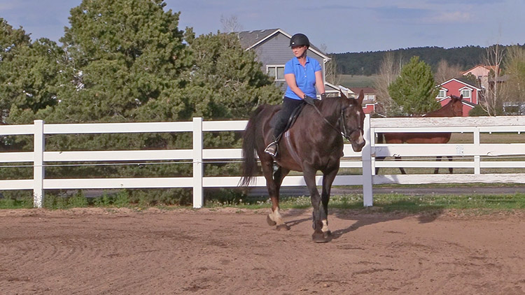 the benefits of walking your horse