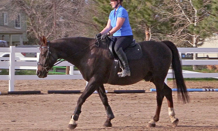 Online Horse Shows