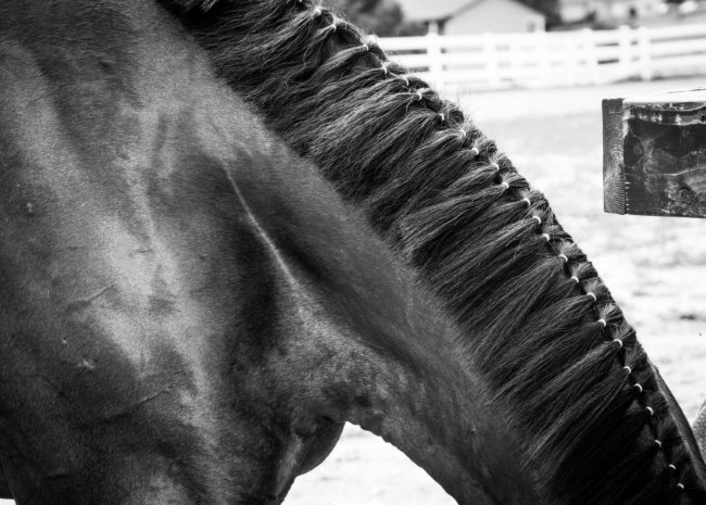 100 Things To Do With Your Horse