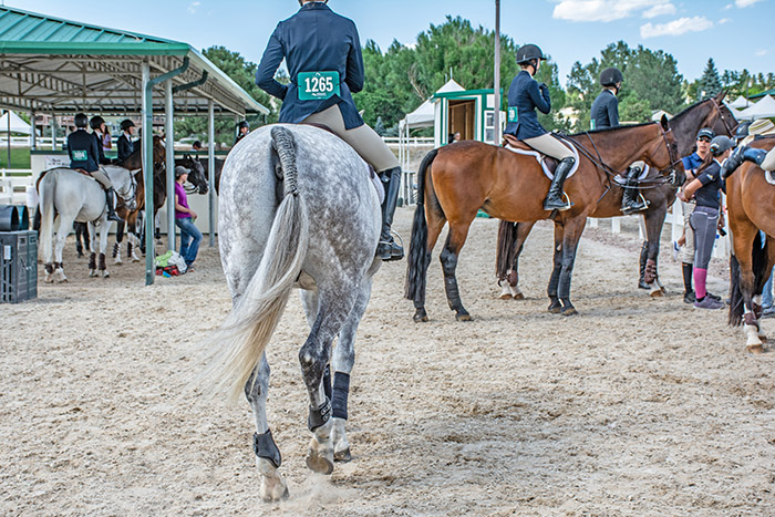 How Much Does It Cost To Enter A Hunter/Jumper Show