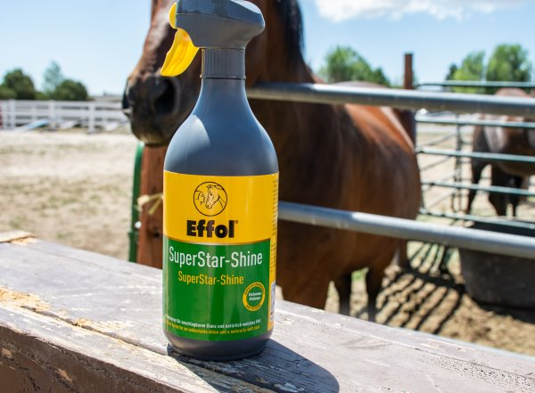 Finding The Best Horse Shine Product