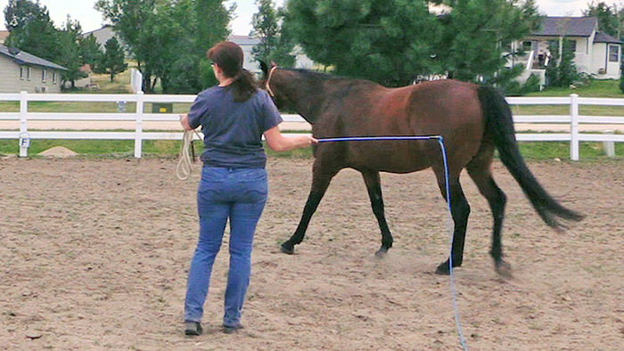 How To Lunge Your Horse