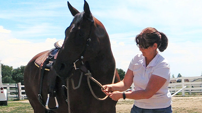 Tacking Up Your Horse For Groundwork